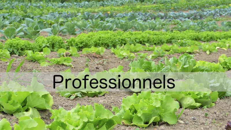 Plants bio pour les maraîchers près de Brest